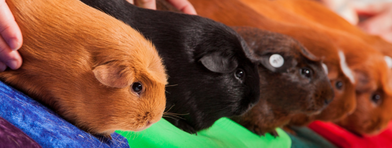 Cybersecurity research: guinea pigs wanted!